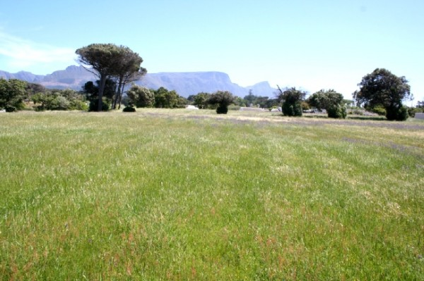 Bergvliet_Cape Town_South Africa_Magic Mountain