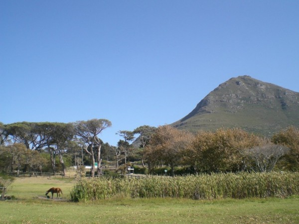 Noordhoek Common_Cape Town_South Africa_Magic Mountain