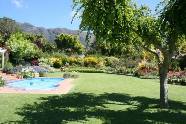 Green Tea_Cape Town_South Africa_Magic Mountain