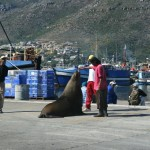 Hout Bay Harbour_Cape Town_South Africa_Magic Mountain