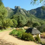 Kirstenbosch Botenical Garden_Cape Town_South Africa_Magic Mountain