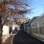 Wolf Street_Cape Town_South Africa_Magic Mountain
