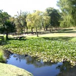 Wynberg Park_Cape Town_South Africa_Magic Mountain